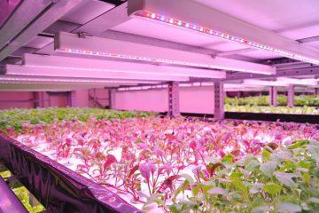 verticale boerderij, vertical farming